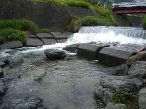 鹿留川の堰堤