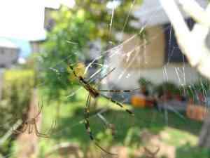 蜘蛛の脱皮