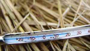 落ち葉の中の温度