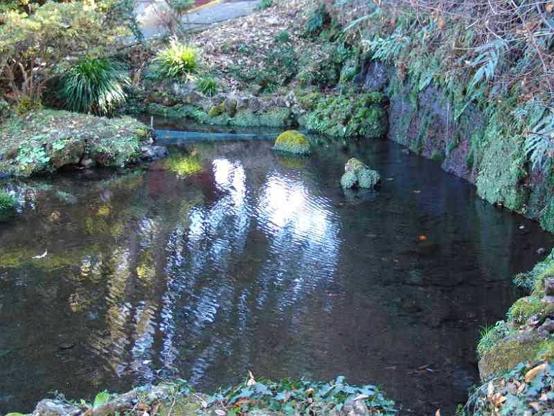 永寿院の池