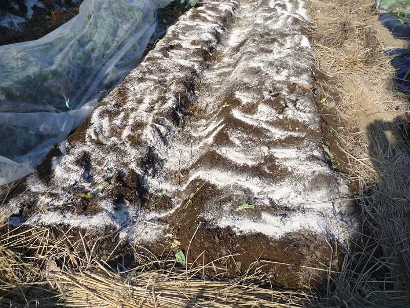 キャベツ畑の後