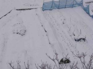 雪におおわれた畑