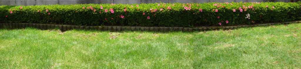 芝生の草取り