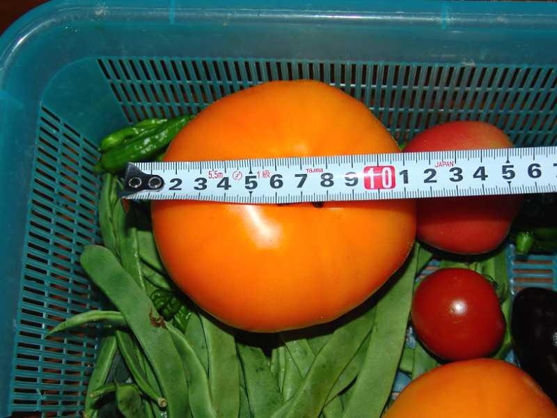 画像1(ビッグなトマト)