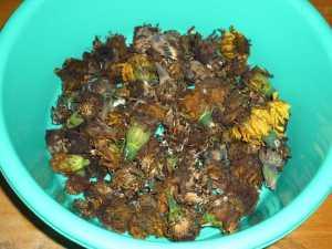 画像4(アフリカンマリーゴールドの種)