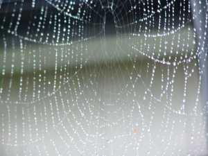 画像1(蜘蛛の巣)