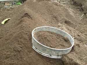 画像2(大根の畝作り)