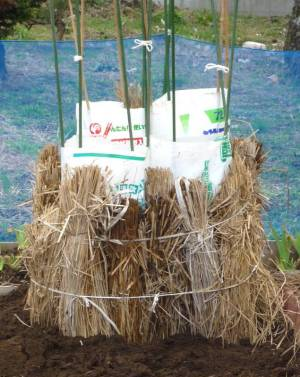 画像4(藁で覆ったビニール袋)