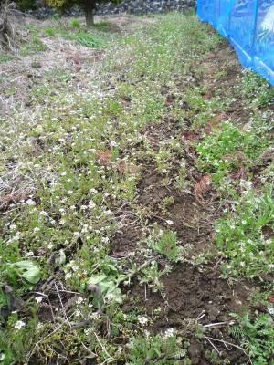 画像4(空き地の草取り)