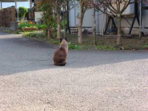 画像4(猫)
