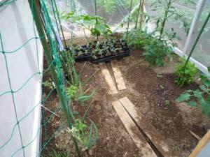 画像1(温室の中の様子)