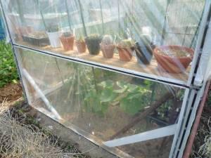 画像5(温室に入れたサボテン)