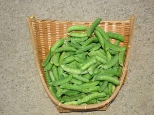 画像5(収穫したエンドウ豆)