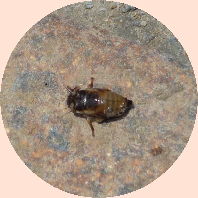 画像4(泡の中にいた虫)