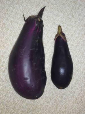 画像1(大きな茄子)
