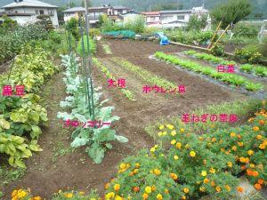 画像1(Sさんの畑)