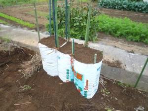 画像6(ゴボウの播種準備 土を入れる)