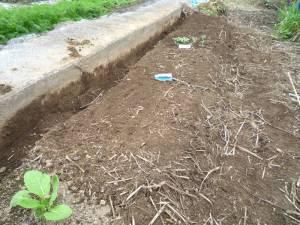 画像2(アスパラ菜と縮みホウレン草の種蒔き)
