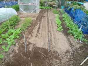 画像6(玉ねぎの畝作り)