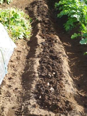 画像3(堆肥を入れた畑)