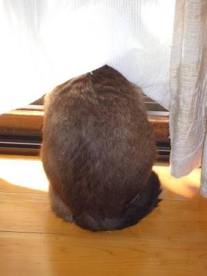 画像3(猫)
