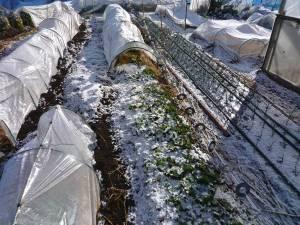 画像2(初雪)