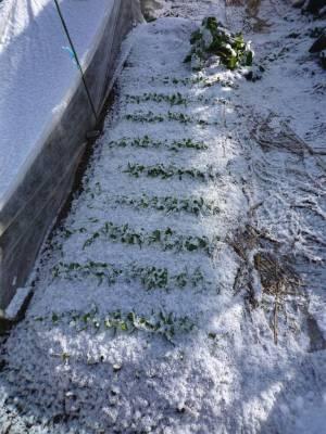 画像3(初雪)