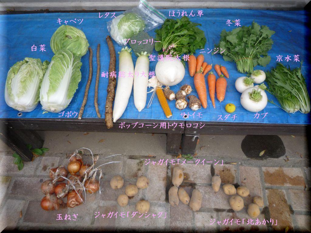 画像1(収穫した野菜)