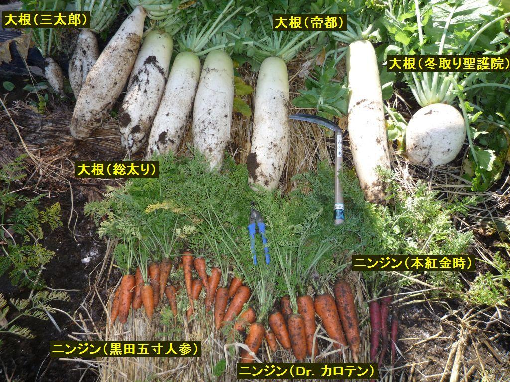 画像1(貯蔵する大根と人参)