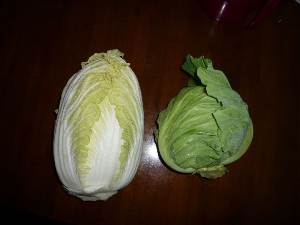 画像4(収穫した白菜とキャベツ)