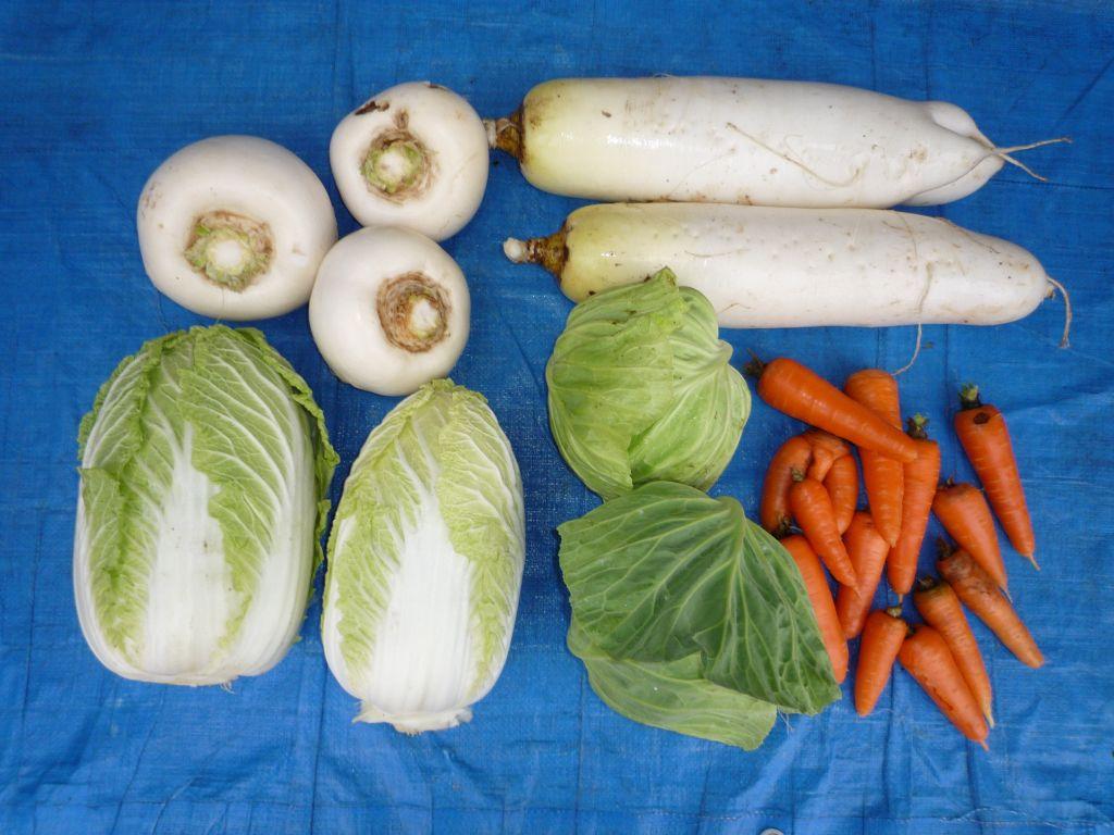 画像4(収穫した野菜)