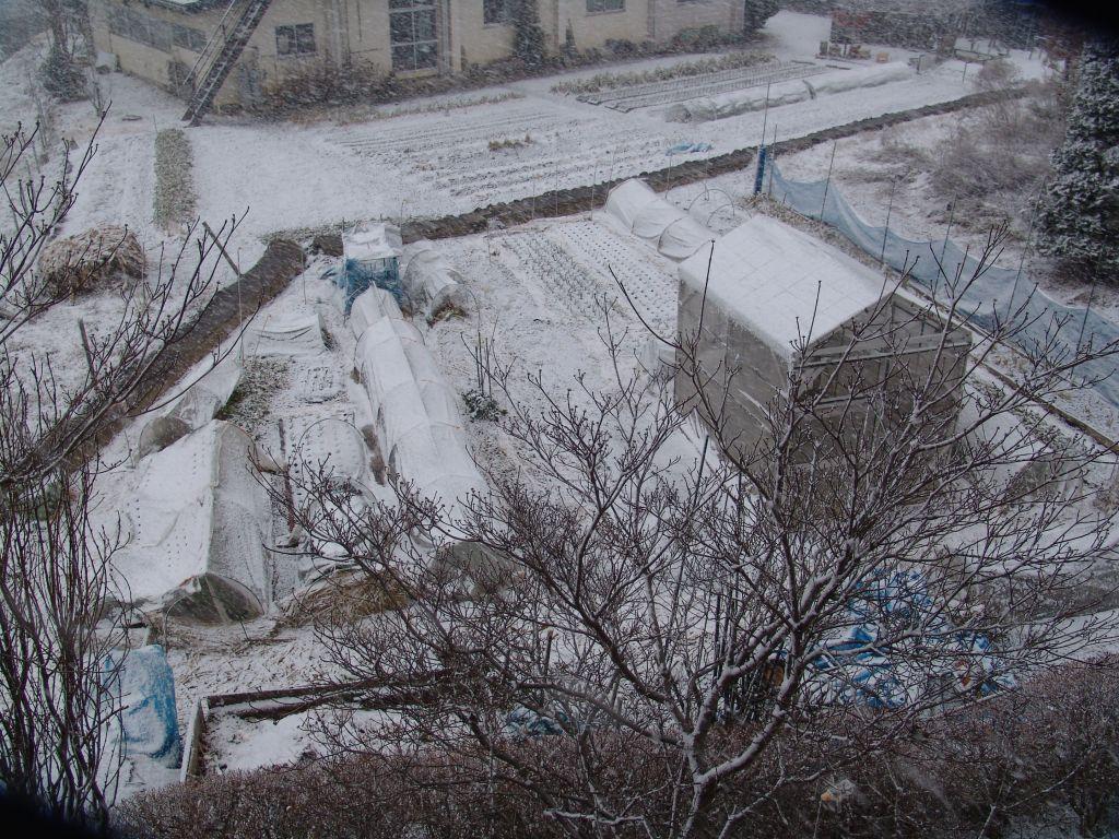 画像1(午後の雪)