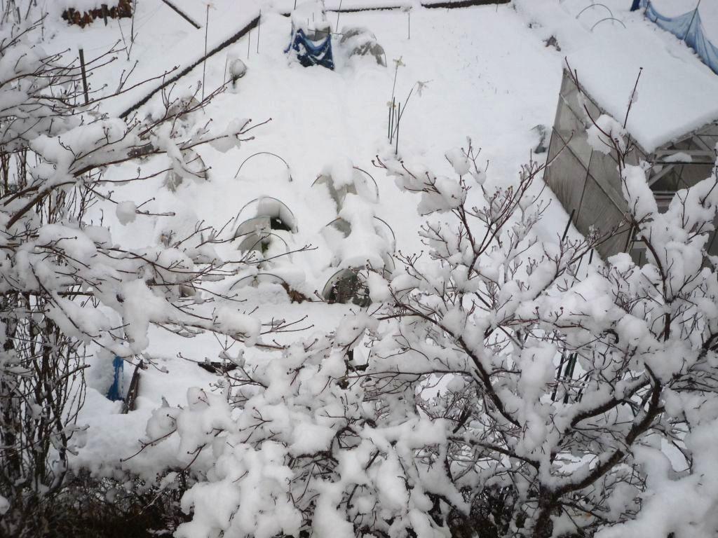 画像1(雪の朝)