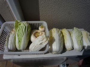 画像3(白菜とカブ)