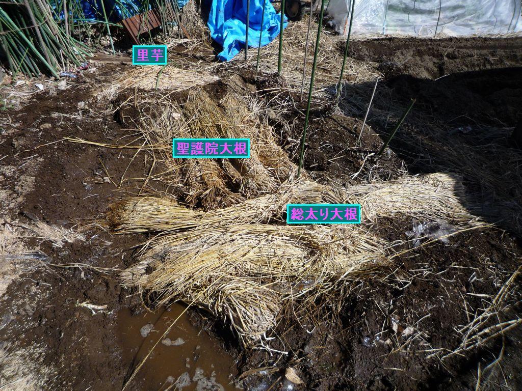 画像1(保存大根、里芋の掘り出し)