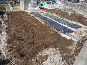 画像4(鶏糞を投入した畑)
