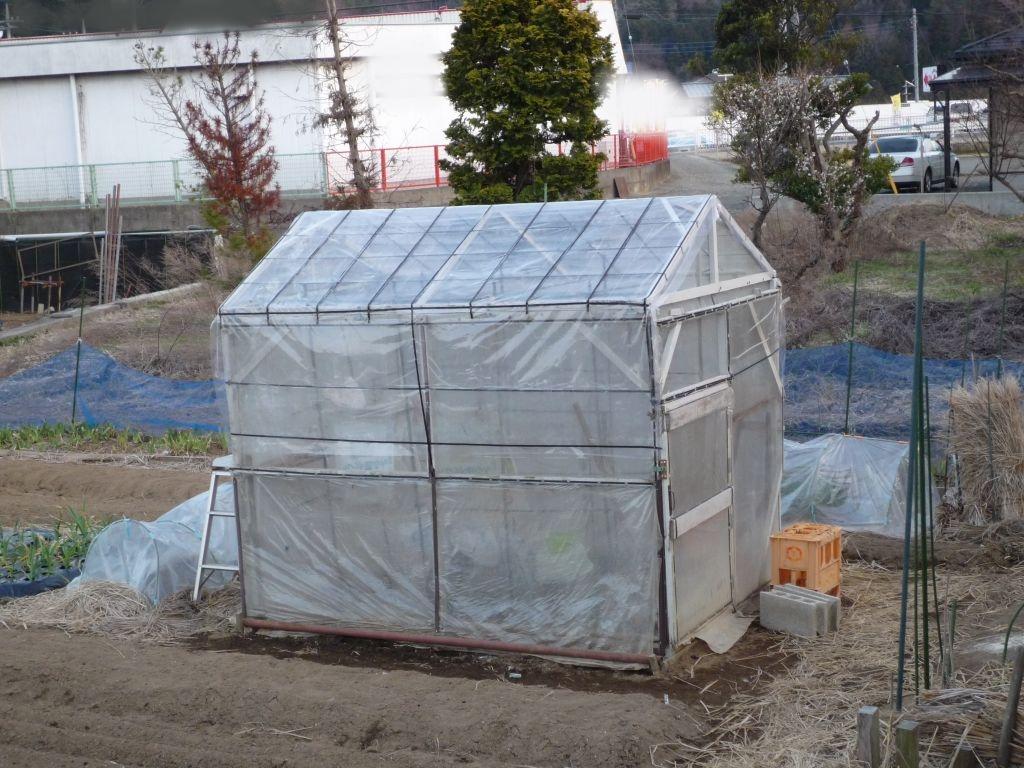 画像4(張り替えた温室の屋根)