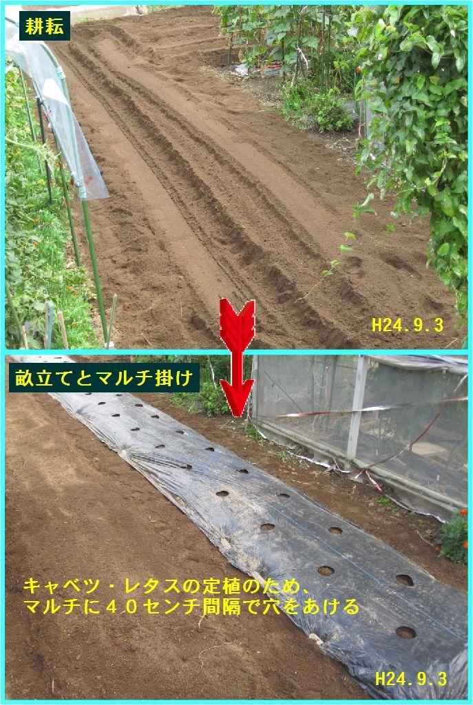 画像3(堆肥入れ後耕し畝立て)