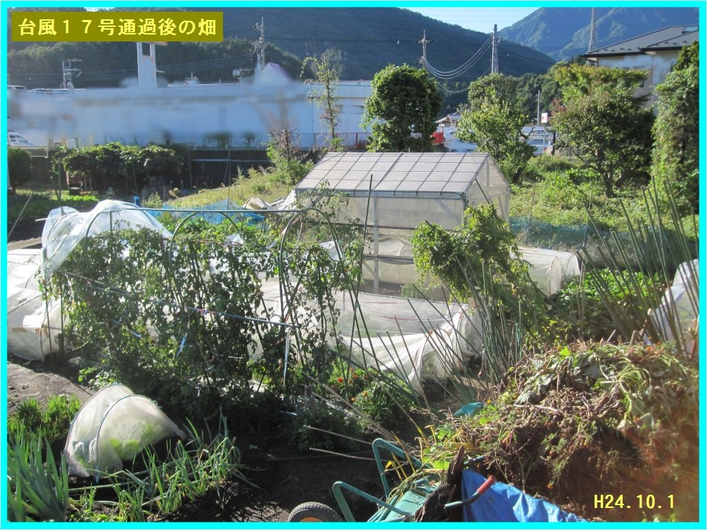 画像1(台風一過の畑)