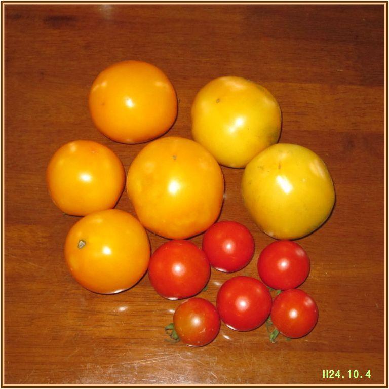 画像1(トマトの完全撤収)