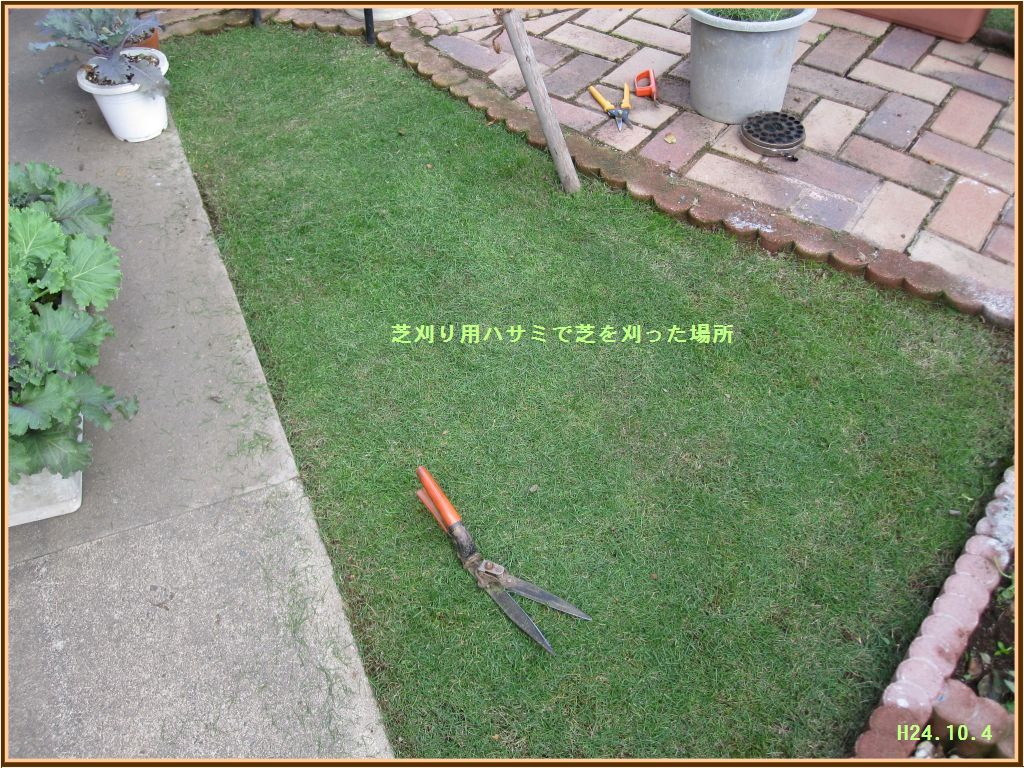 画像6(芝刈り用ハサミで刈った場所)