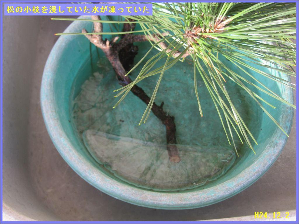 画像2(松の小枝を浸しておいた水が凍る)