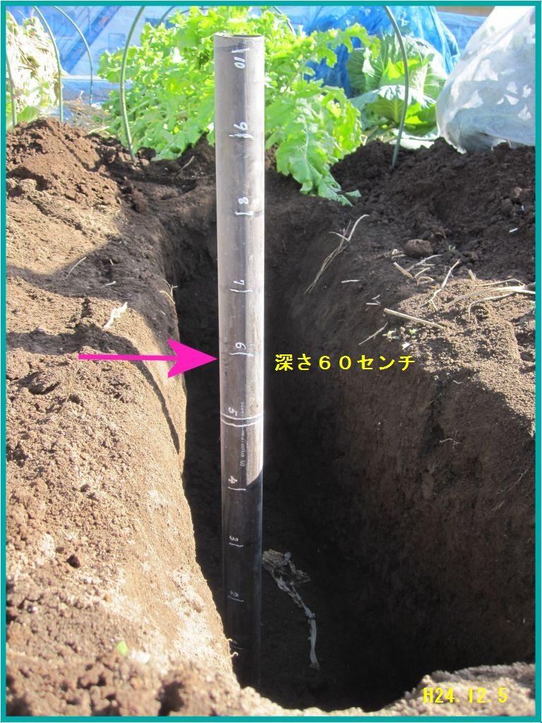 画像3(60センチの深さの穴)