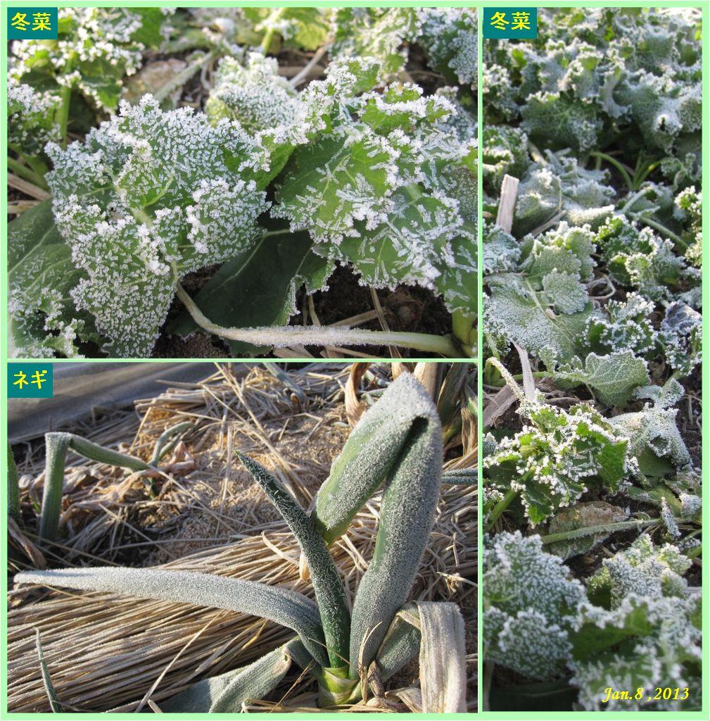 画像1(霜が降りた畑)