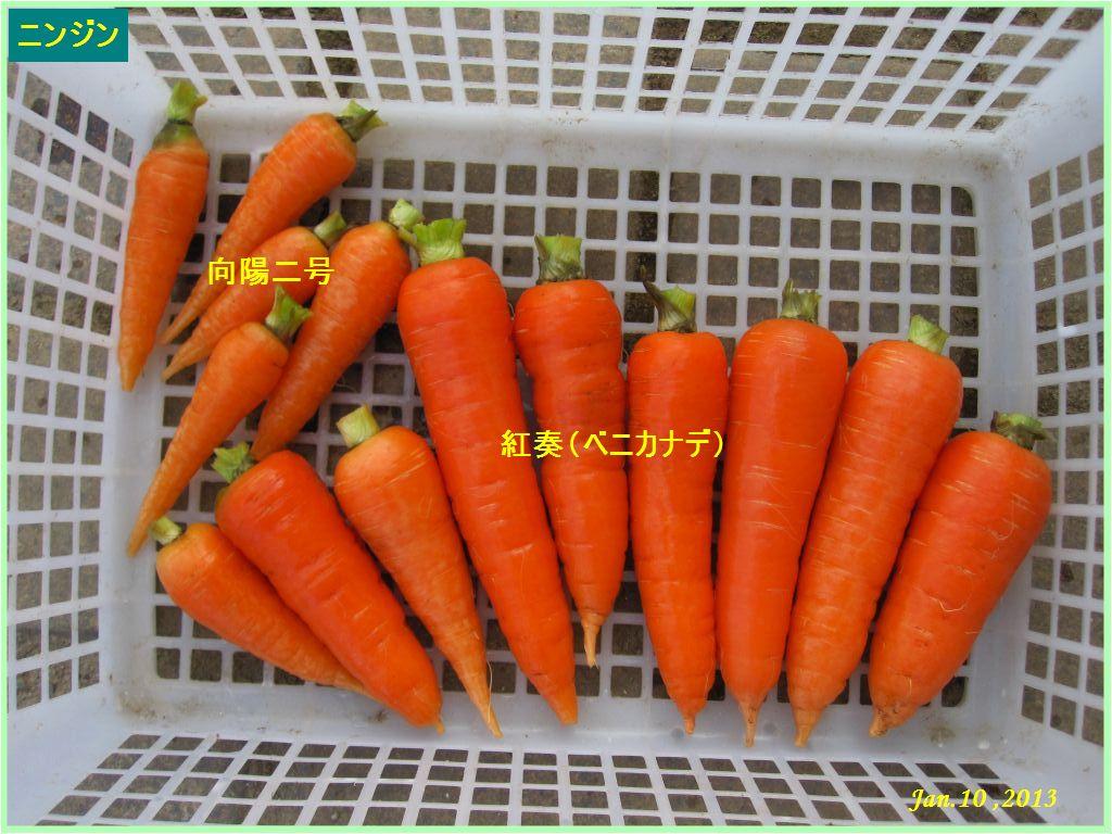 画像5(収穫したニンジン)