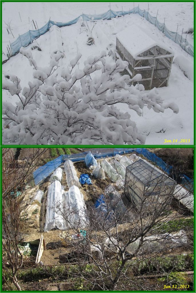 画像1(雪の畑)