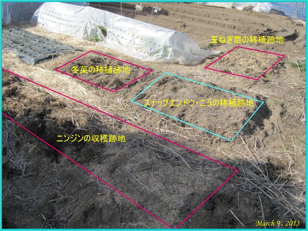 画像2(畑)