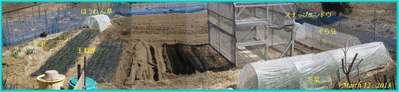 画像2(畑のパノラマ)
