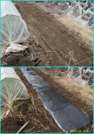 画像4(畑の準備)