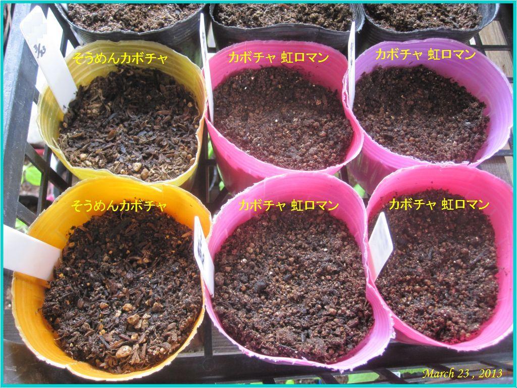 画像3(カボチャの種蒔き)
